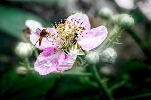 Kostenloses Stock Foto zu ameise, blühende pflanze, blüte