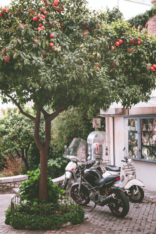 Motorcycles Parked Under A Tree