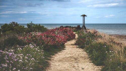 Δωρεάν στοκ φωτογραφιών με γρασίδι, γραφικός, δρόμος, θάλασσα