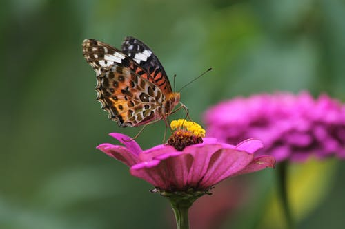 Macro Shot of a Butterfly Pollinating a Purple Flower