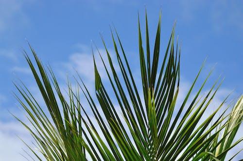 Foto profissional grátis de atraente, aumento, brilhante, céu azul