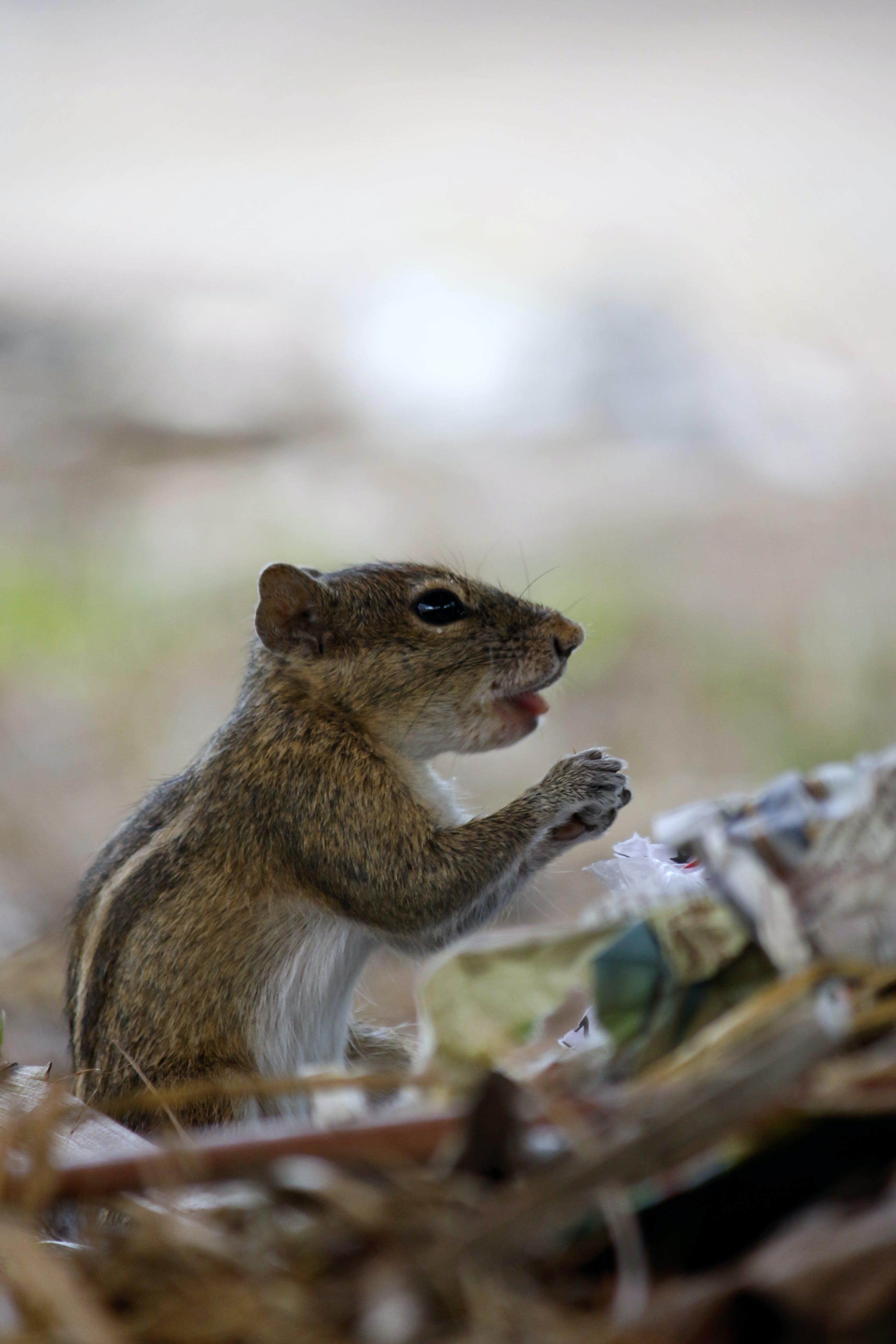 Free stock photo of animal, animal-face, animal-photography, cute