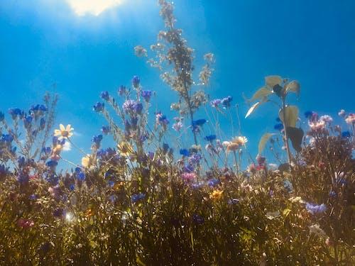 Free stock photo of cottagecore, daisies, ihdie