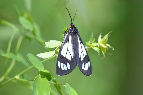 böcek, çevre, Doğa Ana, kelebekler içeren Ücretsiz stok fotoğraf