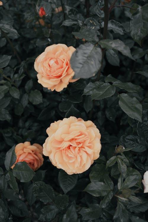 Immagine gratuita di aiuola, albero in fiore, allevamento di fiori
