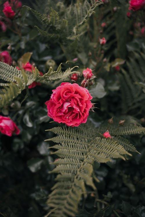 Immagine gratuita di aiuola, albero, albero in fiore