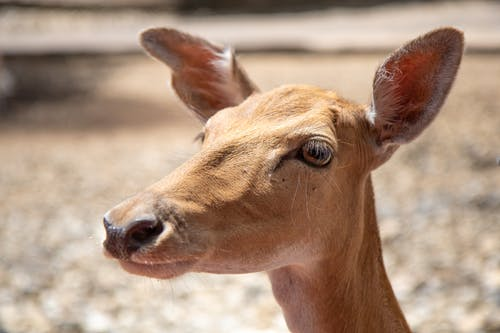 Fotos de stock gratuitas de animal, antílope, césped