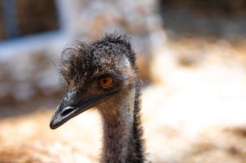 Fotos de stock gratuitas de al aire libre, animal, aves de corral