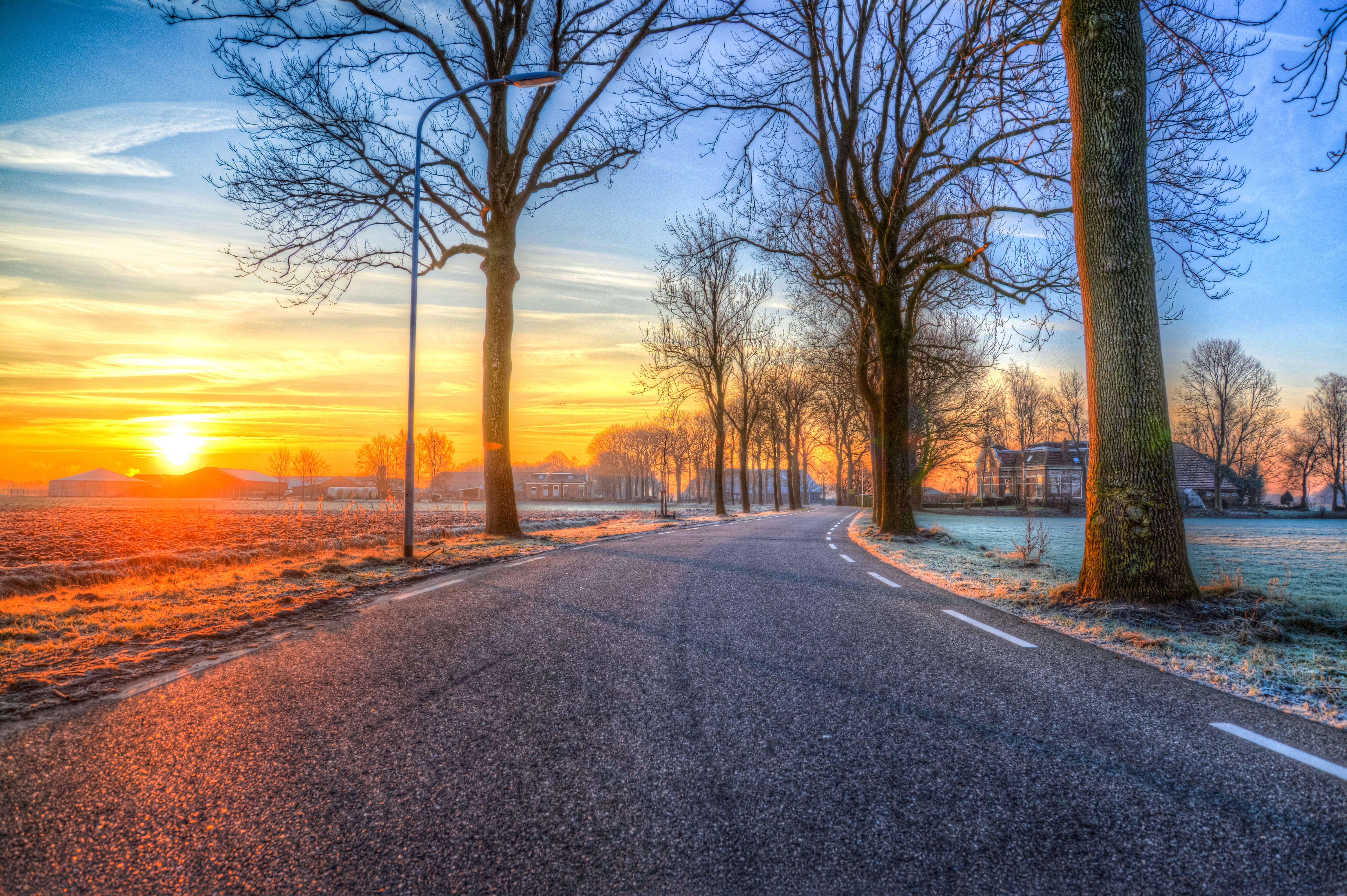 Foto profissional grátis de alvorecer, árvores, asfalto, céu