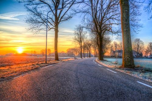 Gratis stockfoto met asfalt, bomen, dageraad, hemel