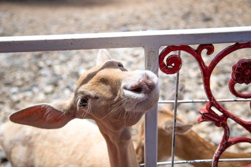Fotos de stock gratuitas de bigotes, ciervo, fauna