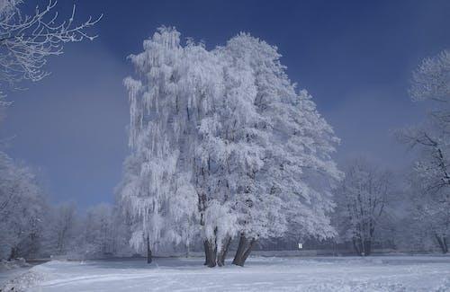 Fotobanka sbezplatnými fotkami na tému chladný, deň, denné svetlo, ľad