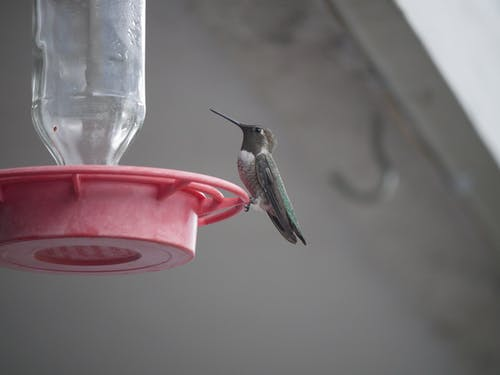 Shallow Focus Photo of a Black-Chinned Hummingbird Perched on a Bird Feeder