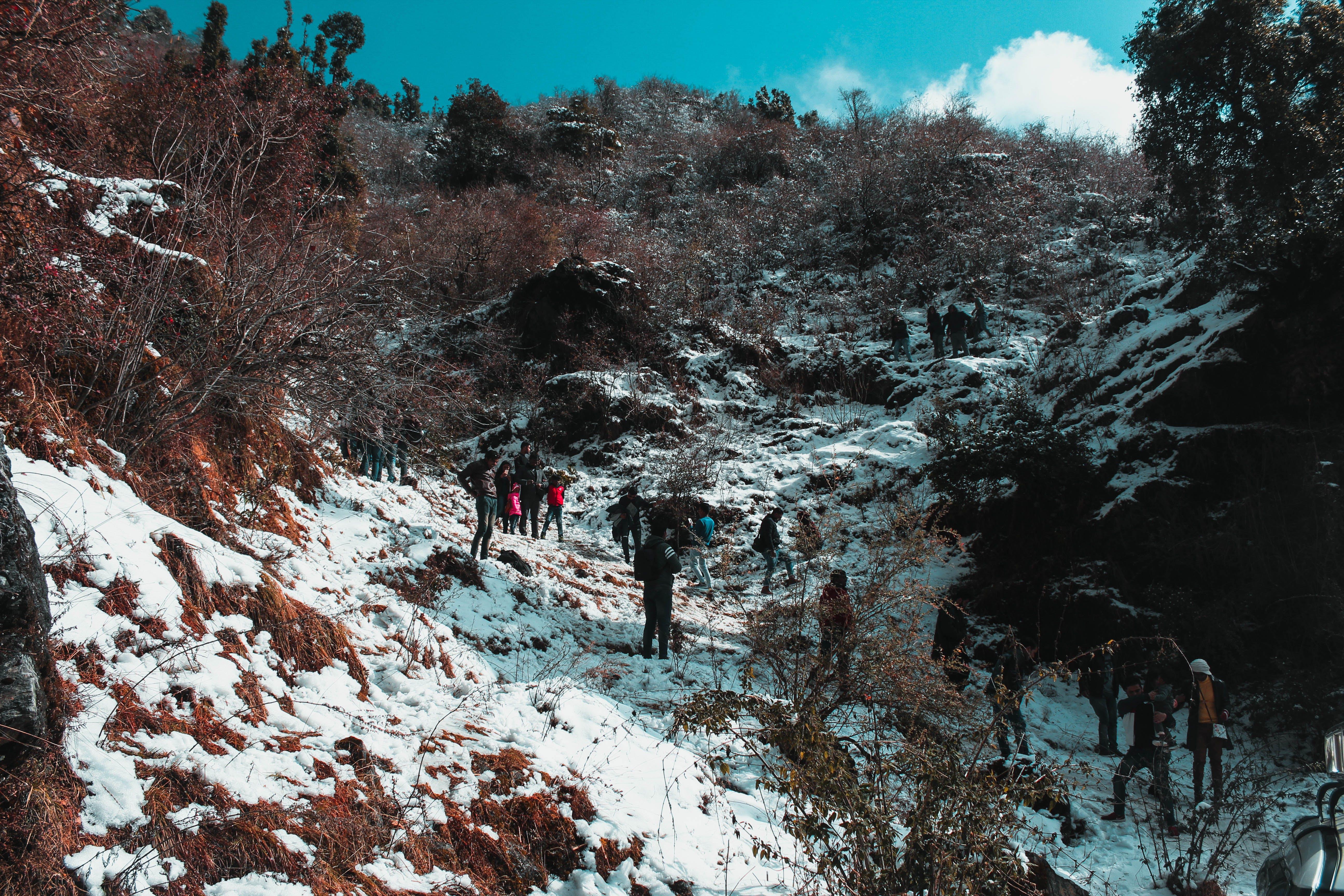 Бесплатное стоковое фото с восходить, гора, горный туризм, деревья