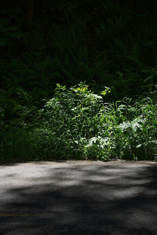 Gratis stockfoto met Bos, groen, straat