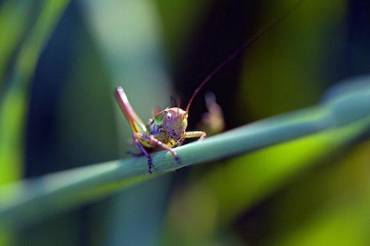Green Purple Grass Hopper Close Up Photography