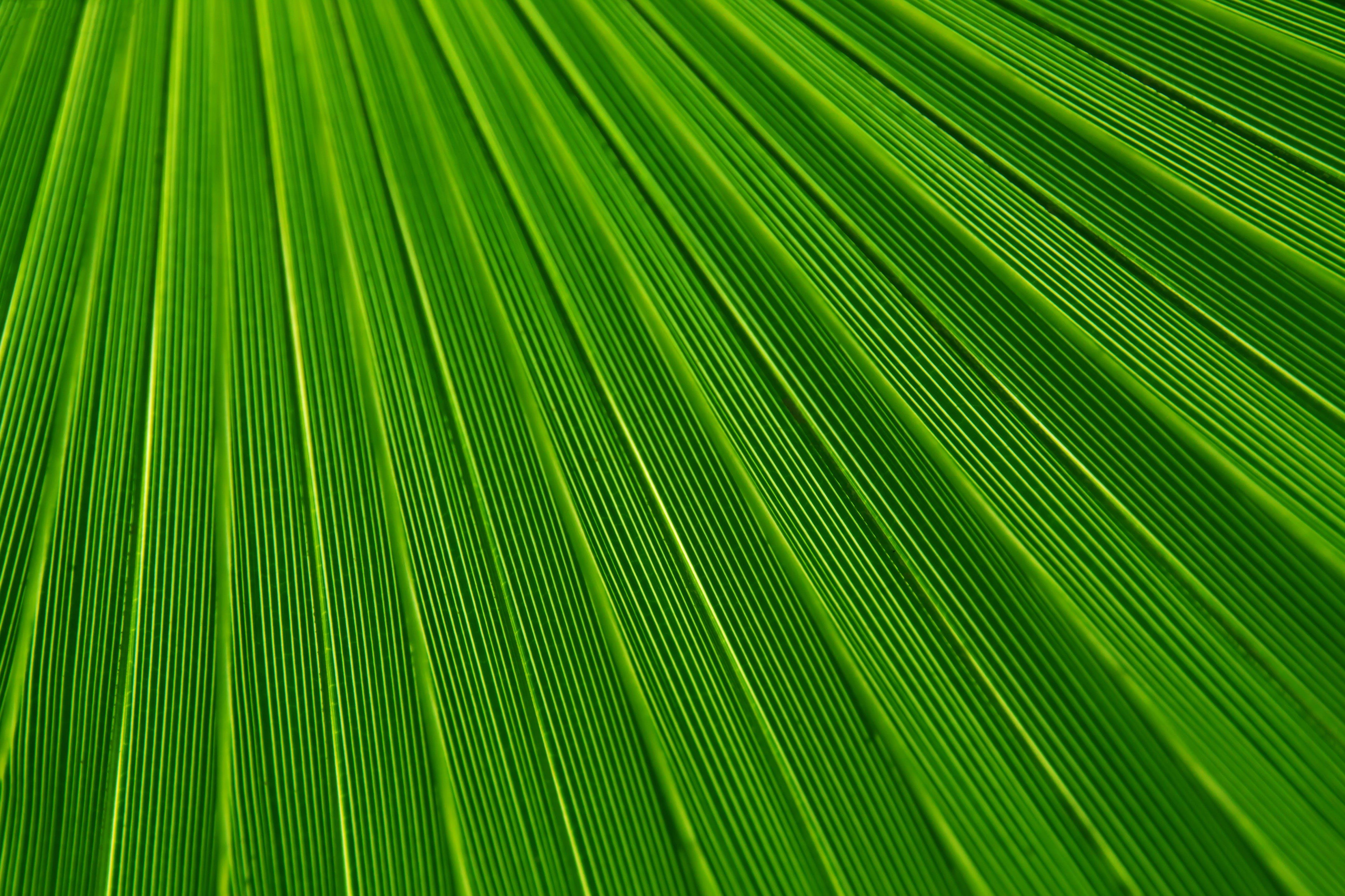 Green Line Illustration