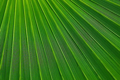 Foto stok gratis garis, hijau, makro, permukaan
