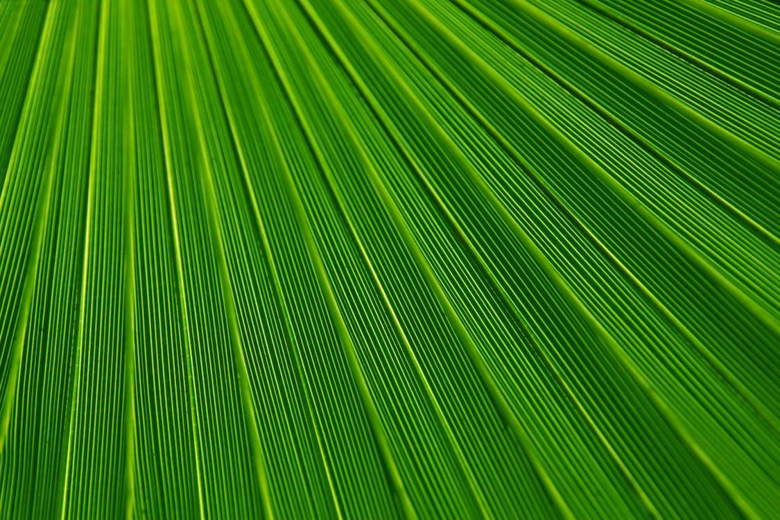 녹색, 매크로, 질감