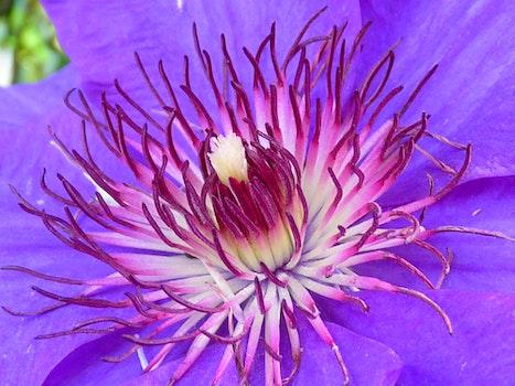 Purple Multi Petaled Flower Macro Photography