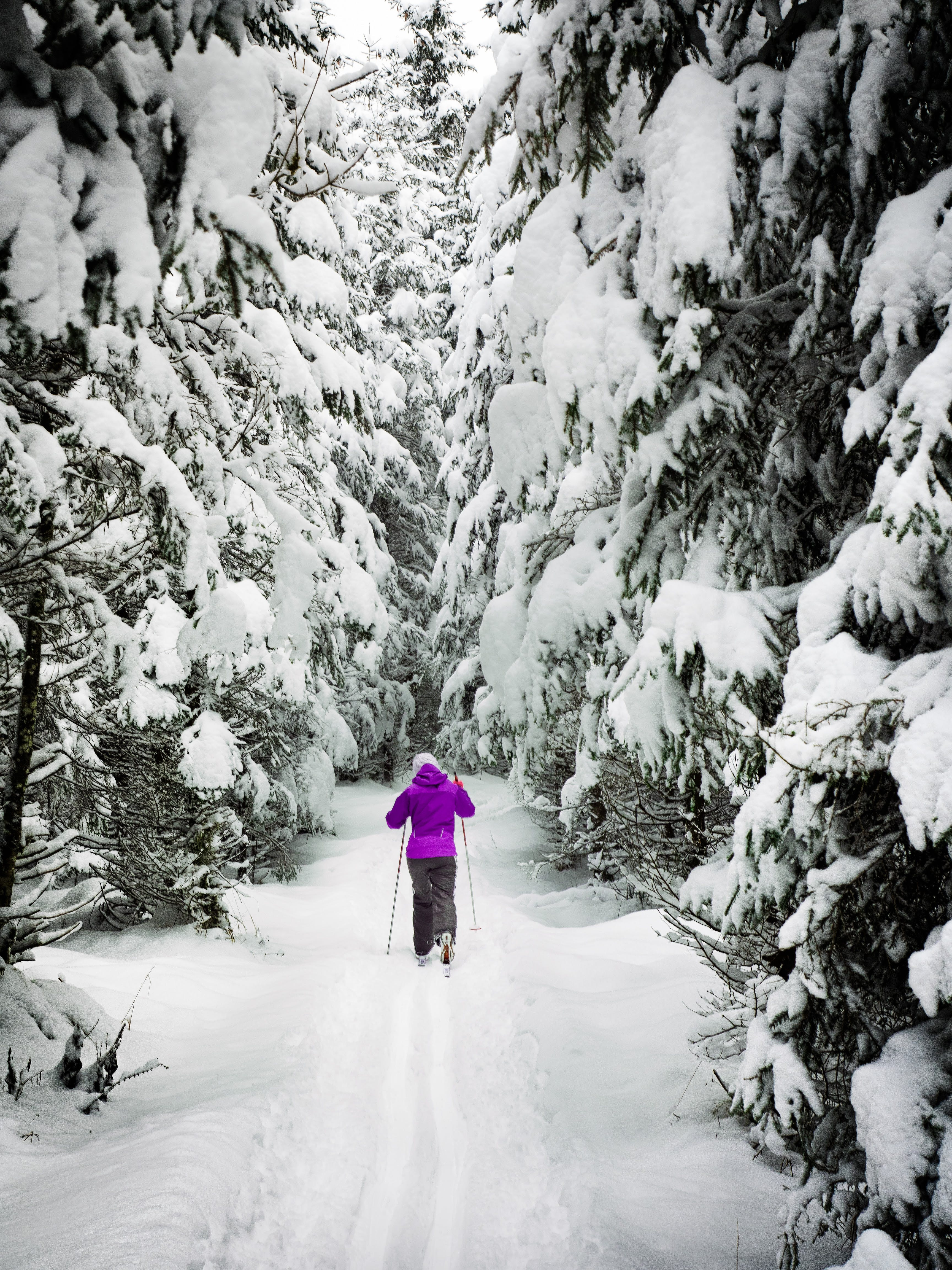Woman on Snow Ground in the Forest With Rods