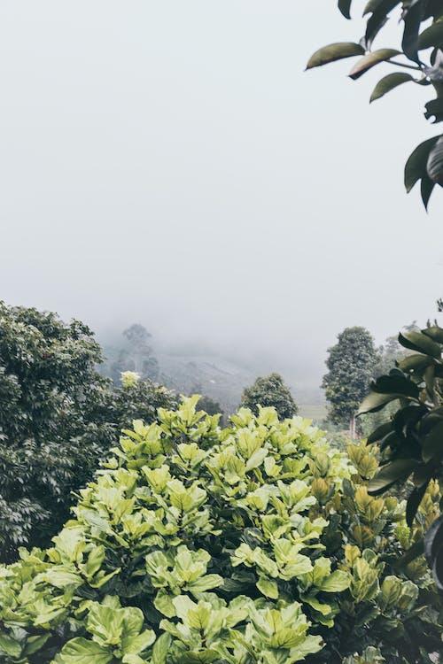 Kostnadsfri bild av anläggning, dimma, dimmig, miljö