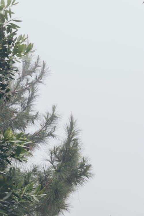 Fotos de stock gratuitas de árbol, con niebla, durante el día, naturaleza