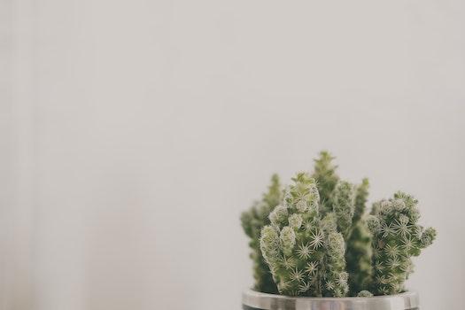 Kostenloses Stock Foto zu pflanze, topf, verschwimmen, farben