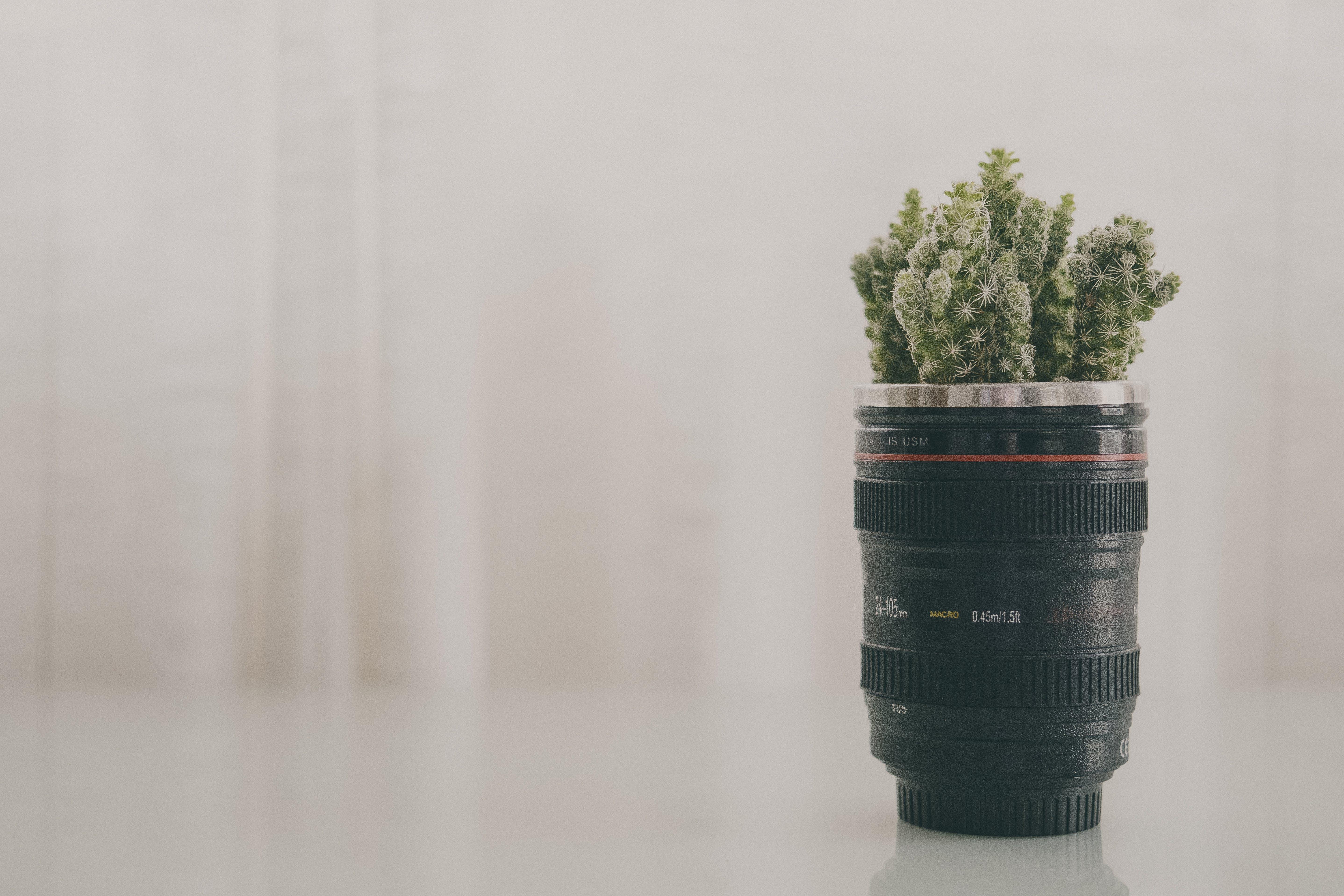 Green Leaf Plant in Black Camera Zoom Lens Plant Pot Screenshot