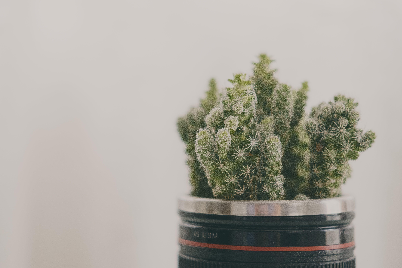 Darmowe zdjęcie z galerii z kaktus, kolczasty, makro, roślina