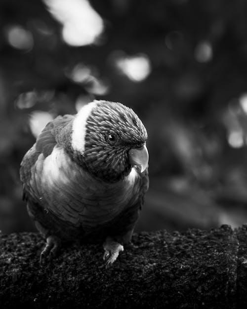 Grayscale Photo of Bird on Ground