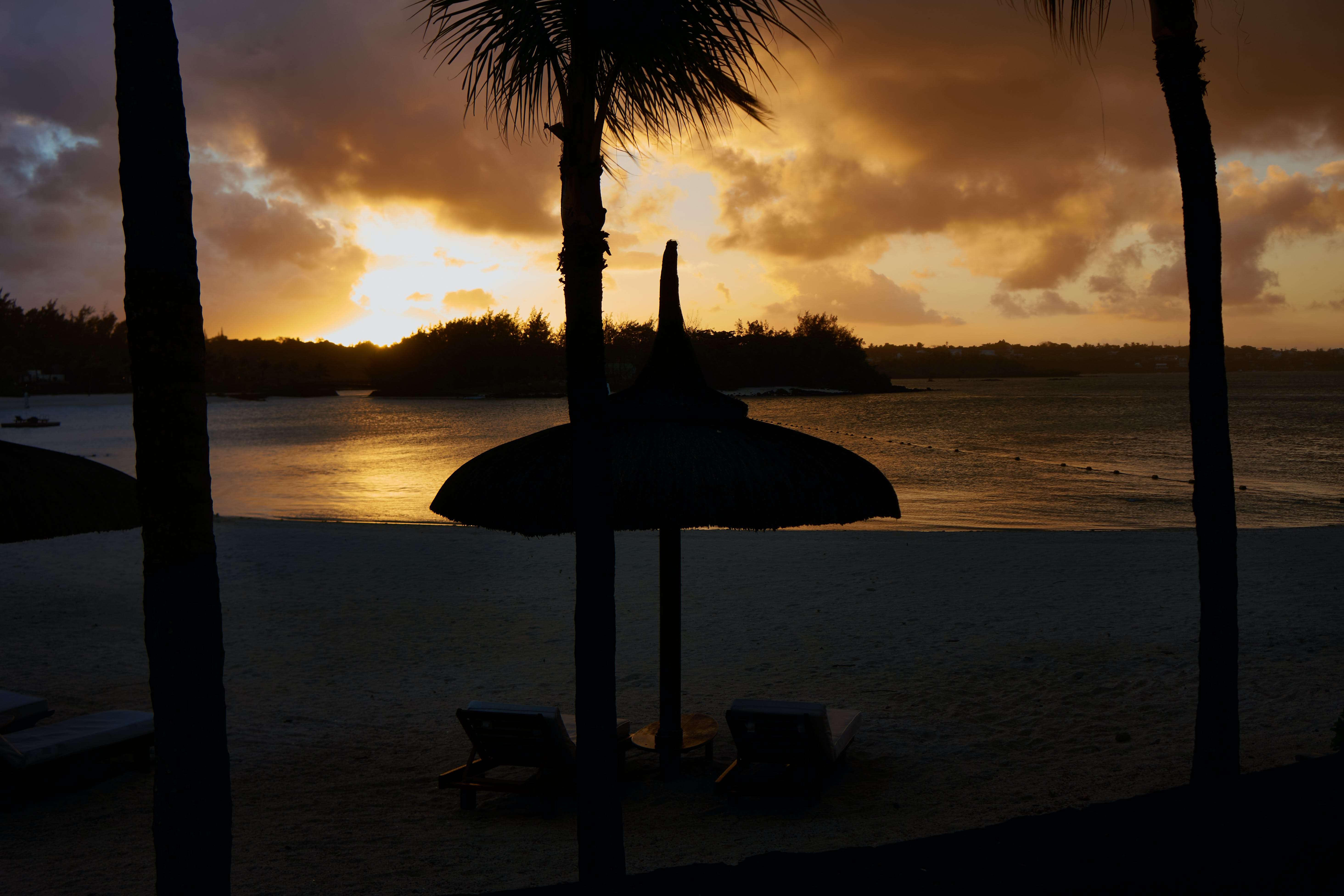 Silhouette of Parasol and Palm Trees Near Seashore