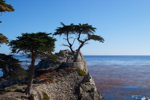 Foto profissional grátis de água, árvores, cênico, costa