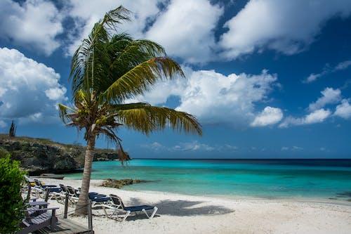Foto profissional grátis de areia, árvore, cadeiras de praia, céu