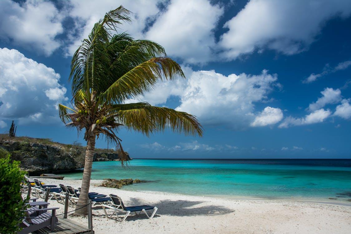 Fotos de stock gratuitas de árbol, arena, cielo