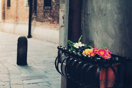 bitki örtüsü, bitkiler, Çiçek açmak, Çiçekler içeren Ücretsiz stok fotoğraf
