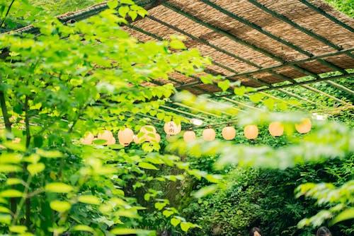 Imagine de stoc gratuită din agricultură, arbore, copac