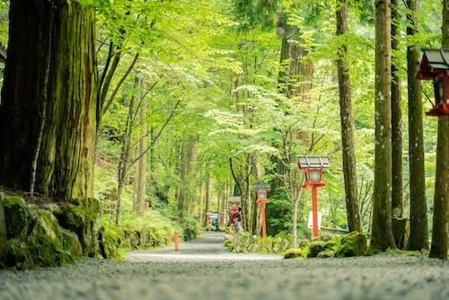 Imagine de stoc gratuită din arbore, cădere, copac