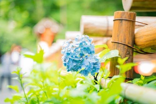 Imagine de stoc gratuită din cădere, creștere, floare