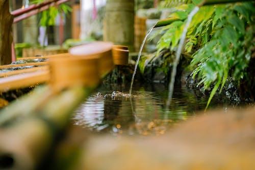 Imagine de stoc gratuită din apă, bambus, cădere