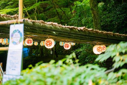 Imagine de stoc gratuită din agățat, arbore, atârnat