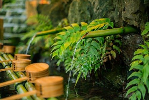 Imagine de stoc gratuită din apă, arbore, bambus