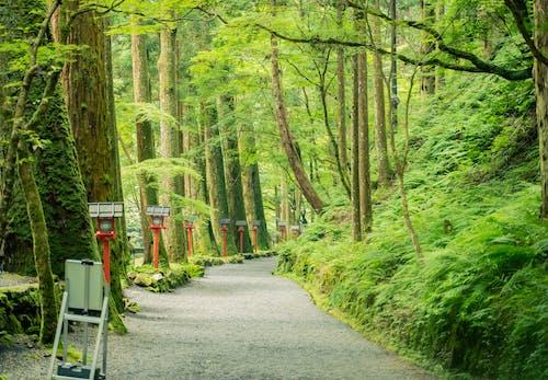 Imagine de stoc gratuită din anotimp, arbore, bandă