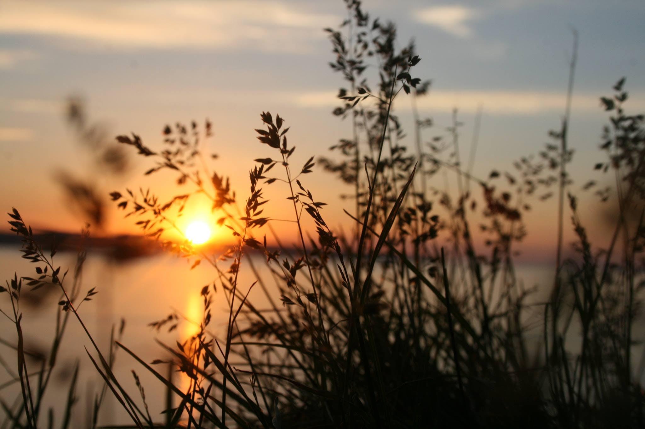 Kostenloses Stock Foto zu blätter, fluss, pflanzen, silhouette