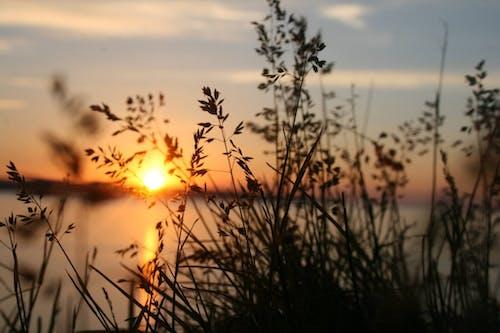 シルエット, 川, 日没, 植物の無料の写真素材