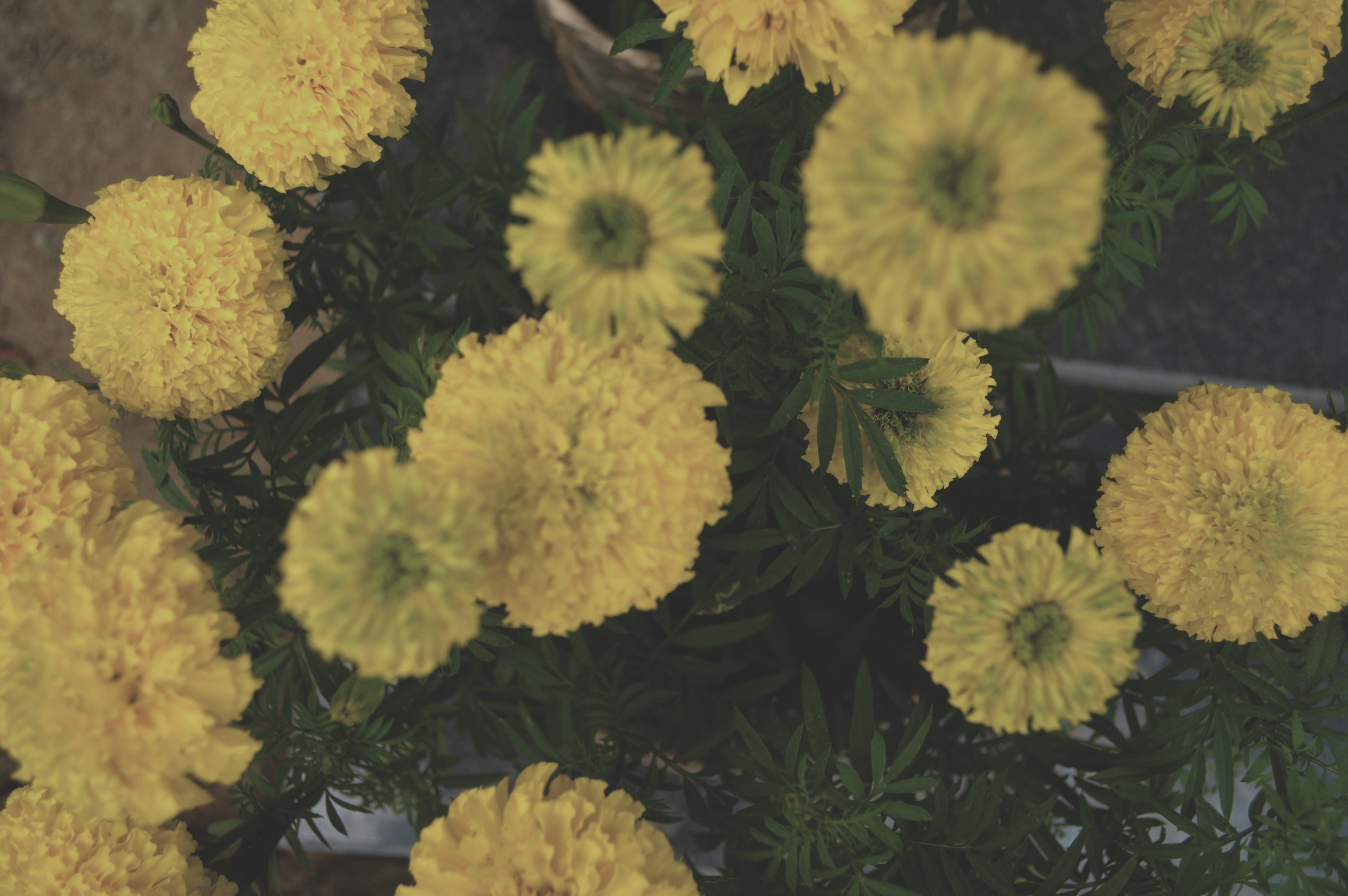 Free stock photo of flower