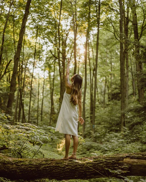 Foto stok gratis bagian belakang, gaun putih, hutan