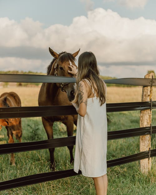 Foto stok gratis agrikultura, bidang, binatang
