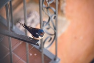 Blue and Black Bird on Top of Metal Frame