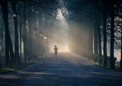 エネルギー, ジョギング, パーク, フィットネスの無料の写真素材